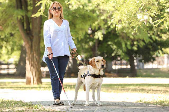 image of blind woman walking dog